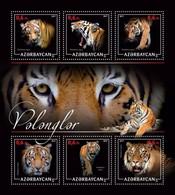 Azerbaijan. 2017 Tigers. - Azerbaïdjan