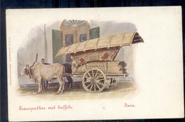 Nederlands Indië - Java - Transportkar - Buffel - 1900 - Pays-Bas