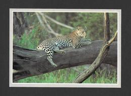 ANIMAUX - ANIMALS - AFRICAN LEOPARD - WILDLIFE AFRICA PHOTO ANUP AND MANOJ SHAH - Animaux & Faune