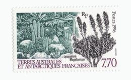 VP6L8 TAAF FSAT Antarctic Neufs**  Flore Lycopodium 7.70 Francs 1996 N°209 - Terres Australes Et Antarctiques Françaises (TAAF)