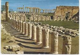 Palmyre - Les Ruines - Syria