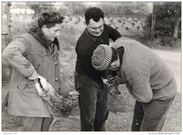 GROUPE DE CHASSEURS BAGUANT DU GIBIER  TIRAGE PHOTO ARGENTIQUE - Photographs