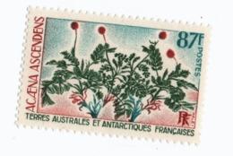 VP6L9 TAAF FSAT Neufs ** MNH Flore Acaena Ascendens 87 F N 53 1974 - Terres Australes Et Antarctiques Françaises (TAAF)