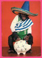 Monkey - Singe Humanisé - Mexicain - Tirelire Cochon - Monos