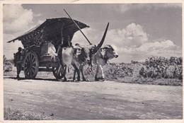 GEROBAK SAPI DJAWA TENGAH. FOTO KEMPEN. SINGAPORE- CIRCA 1940s - BLEUP - Singapore