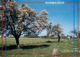 CPSM La Normandie Et Ses Pommiers En Fleurs                                  L2735 - Basse-Normandie