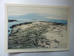 ECUADOR - Equateur - Galapagos - Iguanes De Mer - Collections