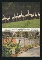 Metelener Heide - Vogelpark [AA24-0.963 - Germany