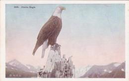 Alaska Alaskan Bald Eagle - United States