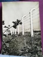 POLOGNE - AUSCHWITZ - OSWIECIM - BARBELES DE L'ENCEINTE DE BRZEZINKA - CPSM CARTE PHOTO VIERGE - Pologne