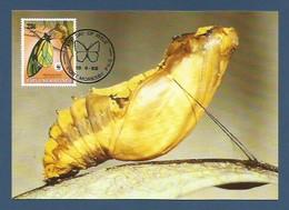 Papua-Neuguinea 1988  Mi.Nr. 576 , Queen Alexandra`s Birdwing Butterfly - WWF Maximum Karte - First Day  19.9.1988 - Papouasie-Nouvelle-Guinée