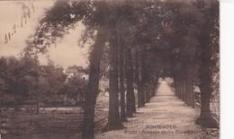MONTEVIDEO. PRADO. AVENIDA DE LOS EUCALIPTOS. URUGUAY. CIRCULEE 1919 A ROSARIO. TIMBRE ARRACHE- BLEUP - Uruguay