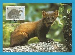 Irland 1992   Mi.Nr. 801 , Pine Marten - WWF Maximum Karte - First Day  9.VII.1992 - Cartes-maximum