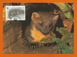 Irland 1992   Mi.Nr. 800 , Pine Marten - WWF Maximum Karte - First Day  9.VII.1992 - Cartes-maximum
