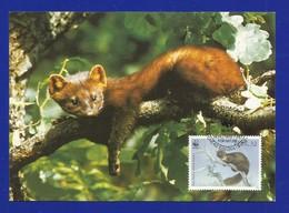 Irland 1992   Mi.Nr. 799 , Pine Marten - WWF Maximum Karte - First Day  9.VII.1992 - Cartes-maximum