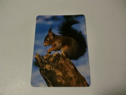 Squirrel Ecureuil Esquilo Portugal Portuguese Pocket Calendar 1990 - Calendriers