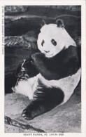 Missouri St Louis Zoo Giant Panda Bear - St Louis – Missouri
