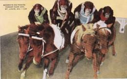 Missouri St Louis Monkeys Riding Ponies Forest Park Zoo - St Louis – Missouri