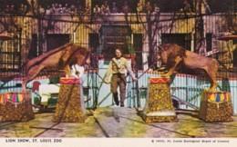 Missouri St Louis Zoo The Lion Show - St Louis – Missouri