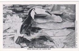 Missouri St Louis Zoo Toco Toucan - St Louis – Missouri