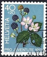 Switzerland 1973 - Blackberry ( Mi 1015 - YT 974 ) - Oblitérés