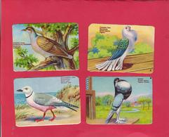 8 Chromos - Découpis éducatifs (2 Scans ) Légèrement Gaufrés  - Les Oiseaux  (pigeon - Colombe - Mouette) - Animaux