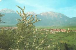 562  AK SLO - RADOVLJICA - Slowenien