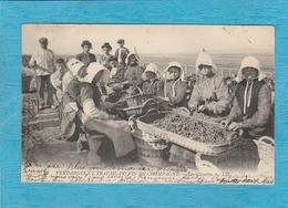 Marne, 1908. - Vendanges Et Travail Du Vin En Champagne. - Les Clayettes. - ( Ouvriers & Ouvrières ). - Francia