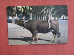 Nude Child On Animal  Egypt     Ref 3095 - Animals