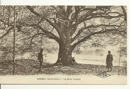 70 - SORNAY / LE GROS FOYARD (ARBRE) - Frankreich