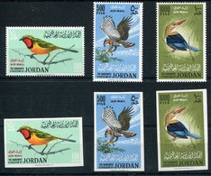 1964-JORDAN-BIRDS-OISEAUX-  VERY RARE SETS-M.N.H.-LUXE ! - Jordanien