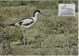 Danemark Carte Maximum 1975 Oiseau Avocette 610 - Cartes-maximum (CM)