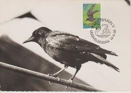 Danemark Carte Maximum 1986 Oiseau Corbeau 876 - Cartes-maximum (CM)