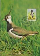 Danemark Carte Maximum 1986 Oiseau Vanneau 878 - Cartes-maximum (CM)