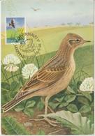 Danemark Carte Maximum 1986 Oiseau Alouette 879 - Cartes-maximum (CM)