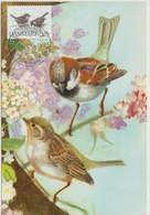 Danemark Carte Maximum 1994 Oiseaux Moineaux 1089 - Cartes-maximum (CM)
