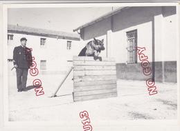 Au Plus Rapide Photo Archive D'un Gendarme Maître-chien Gendarmerie Nationale Beau Format - Guerre, Militaire