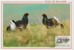 Danemark Carte Maximum 1994 Oiseaux Coqs De Bruyère 1092 - Cartes-maximum (CM)
