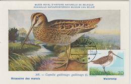 Féroé Carte Maximum Oiseaux 1977 Bécassine 22 - Féroé (Iles)