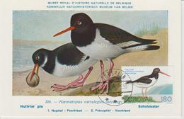 Féroé Carte Maximum Oiseaux 1977 Huitrier 23 - Féroé (Iles)