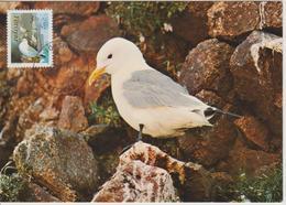 Féroé Carte Maximum Oiseaux 1991 Mouette - Féroé (Iles)
