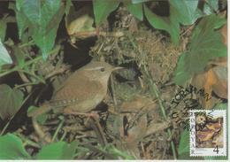 Féroé Carte Maximum Oiseaux 1999 Troglodytes 348 - Féroé (Iles)