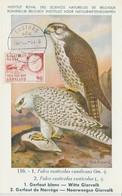 Groenland Carte Maximum Oiseaux 1975 Gerfaut 82 - Cartes-Maximum (CM)