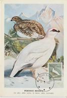 Groenland Carte Maximum Oiseaux 1987 Lagopèdes 164 - Cartes-Maximum (CM)