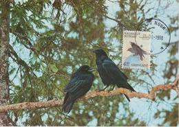 Groenland Carte Maximum Oiseaux 1988 Corbeaux 170 - Cartes-Maximum (CM)