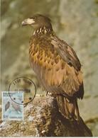 Groenland Carte Maximum Oiseaux 1988 Pygargue 171 - Cartes-Maximum (CM)
