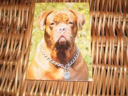 Hund Dog Chien Bordeaux Dogge Postkarte Postcard - Dogs