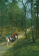 Hoogerheide-Familyland-Manege [AA31-0.659 - Pays-Bas