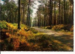 L10K006 - Dans Nos Forêts De Gascogne - La Pinède  - Théojac  N°40/152 - Arbres
