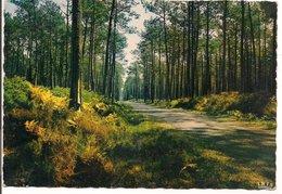 L10K014 - Dans Nos Forêts De Gascogne - La Pinède  - Théojac  N°40/152 - Arbres